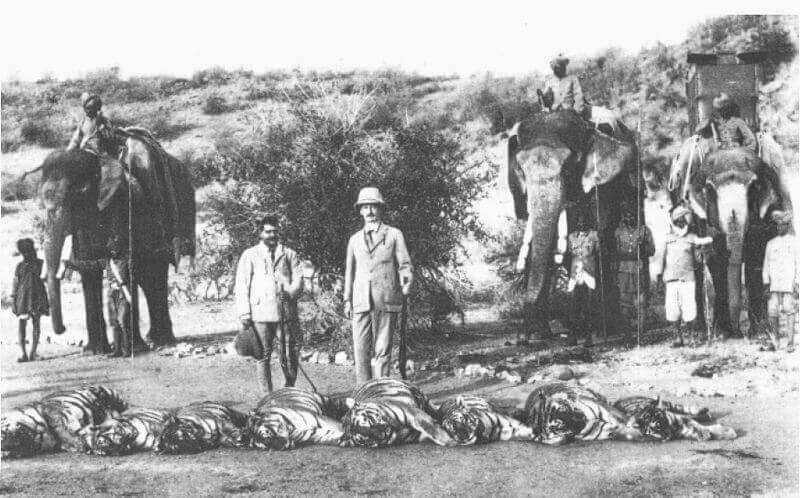 Tiger Hunt by Lord Reading, Viceroy of India